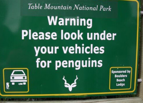 Look For Penguins! - Click To View Image