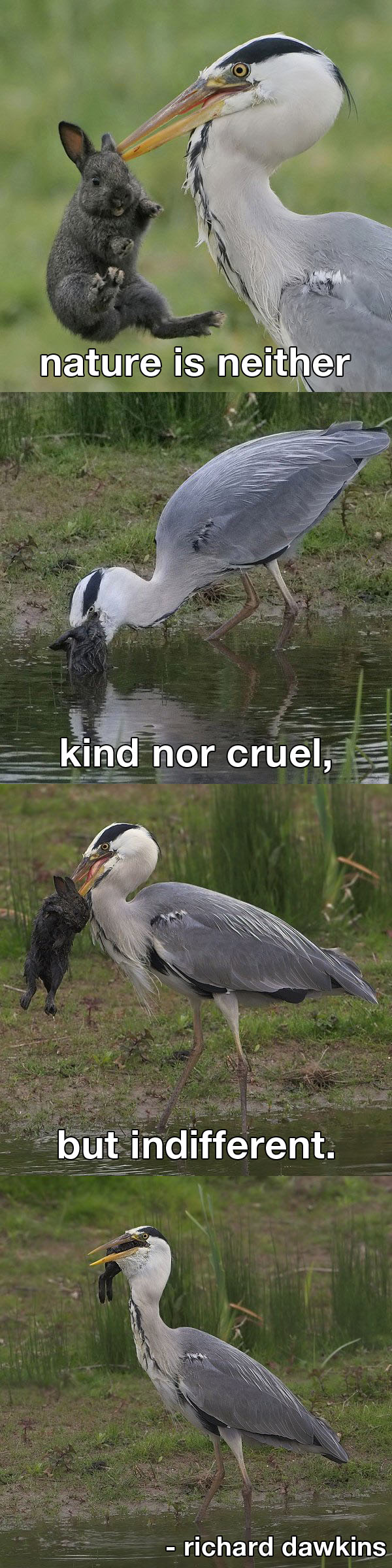 nature cruel - Click To View Image