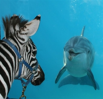 donkphin - Click To View Image