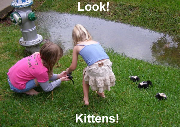 kitties - Click To View Image