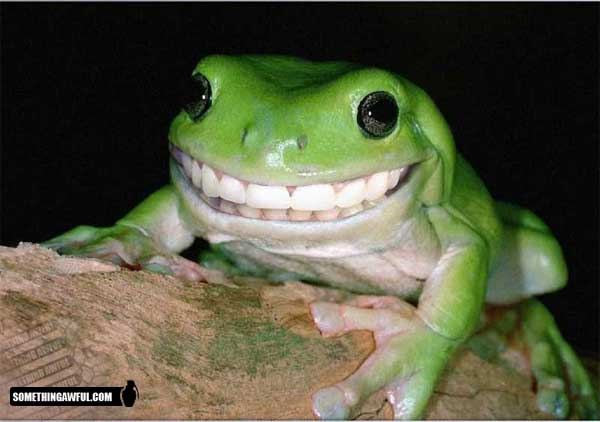 smile frog - Click To View Image